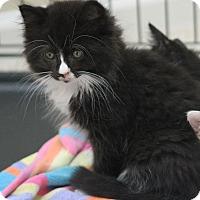 Adopt A Pet :: Fluff - Horsham, PA