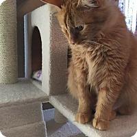 Adopt A Pet :: Sparrow - Putnam, CT