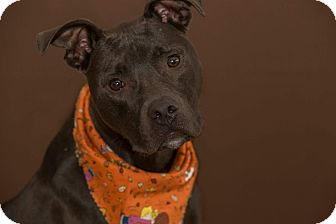 Terrier (Unknown Type, Medium) Mix Dog for adoption in Flint, Michigan - Justice - Adopted
