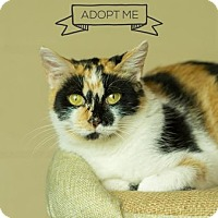 Domestic Shorthair Cat for adoption in Columbia, Illinois - Salle