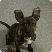 Adopt A Pet :: Nene - Pompton Lakes, NJ
