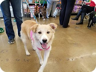Terrier (Unknown Type, Medium) Mix Dog for adoption in Hainesville, Illinois - Cutie Patutie