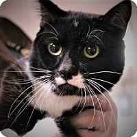 Adopt A Pet :: Fred - Daytona Beach, FL