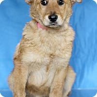 Adopt A Pet :: Raya - Waldorf, MD
