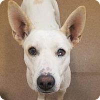 Adopt A Pet :: Fergie #166208 - Apple Valley, CA