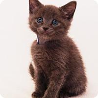 Adopt A Pet :: Seth - Toccoa, GA