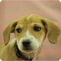 Adopt A Pet :: Genesee - Broomfield, CO