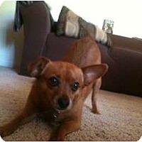 Adopt A Pet :: Leia - Concord, CA