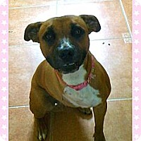 Adopt A Pet :: Penny - Fort Lauderdale, FL