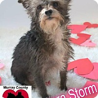 Adopt A Pet :: Aurora Storm - Crandall, GA