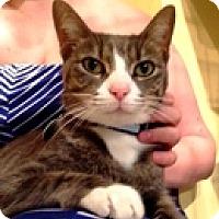 Adopt A Pet :: Lightning - Vancouver, BC