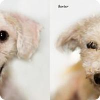 Adopt A Pet :: Baxter & Sophie - Shamokin, PA