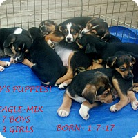 Adopt A Pet :: MAY'S PUPPIES - Ventnor City, NJ