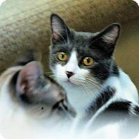 Adopt A Pet :: Lil Bit - Troy, MI