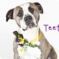 Adopt A Pet :: *TEETEE - Sacramento, CA