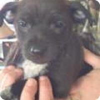 Adopt A Pet :: Raz - Kendall, NY