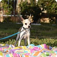 Adopt A Pet :: Dixie - Rosamond, CA