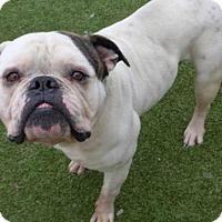 Adopt A Pet :: Hercules - Princeton, MN