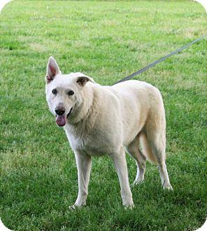 German Shepherd Dog Dog for adoption in Holly Hill, South Carolina - Aeros Heartworm Negative