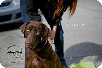 Labrador Retriever Dog for adoption in Burbank, California - Gracelyn-Bonded pair w/Goose