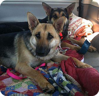 German Shepherd Dog Dog for adoption in Pike Road, Alabama - Natasha