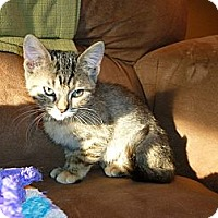 Adopt A Pet :: Lizzy - Xenia, OH