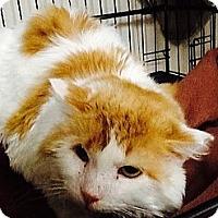 Adopt A Pet :: Oliver - Webster, MA