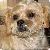 Adopt A Pet :: Freeway in San Mateo - Los Angeles, CA