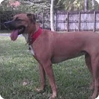 Adopt A Pet :: Ruby - Miami, FL