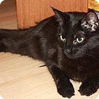 Adopt A Pet :: Brie (LE) - Little Falls, NJ