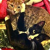 Adopt A Pet :: Tucker URGENT! FOSTER NEEDED - Lafayette, CA