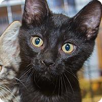 Adopt A Pet :: Xander - Irvine, CA