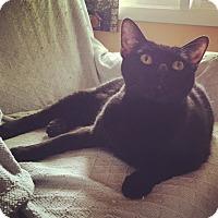 Adopt A Pet :: Sarah - Raleigh, NC