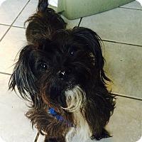 Adopt A Pet :: Harry - Crowley, LA