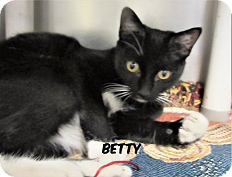 Domestic Shorthair Cat for adoption in Jackson, New Jersey - Betty