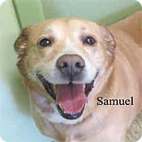 Adopt A Pet :: Samuel - Warren, PA
