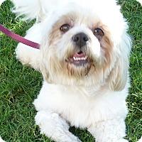 Adopt A Pet :: Vanessa - Los Angeles, CA