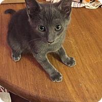 Adopt A Pet :: Tyson - La puente, CA