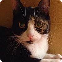 Adopt A Pet :: Rotelle - Menands, NY