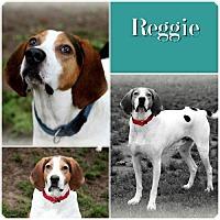 Adopt A Pet :: Reggie -ADOPTED - Ontario, ON