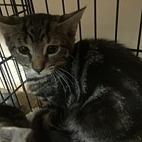 Adopt A Pet :: Pansy - Forest Hills, NY