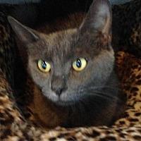 Adopt A Pet :: Blossom - Alamogordo, NM
