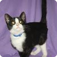 Adopt A Pet :: Micca - Powell, OH