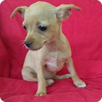 Adopt A Pet :: Donna - Lawrenceville, GA