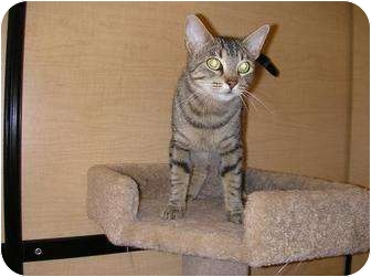 Domestic Shorthair Cat for adoption in Woodstock, Georgia - Lillie