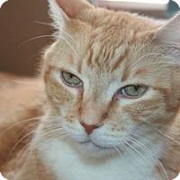 Adopt A Pet :: Ivan - Canoga Park, CA