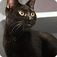 Adopt A Pet :: Trixie - Temple, PA