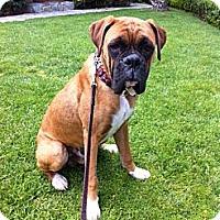Adopt A Pet :: Delany - Santa Monica, CA
