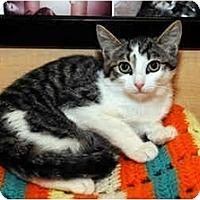 Adopt A Pet :: Foxie - Farmingdale, NY