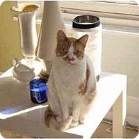 Adopt A Pet :: Tiger Lily Too - Cincinnati, OH